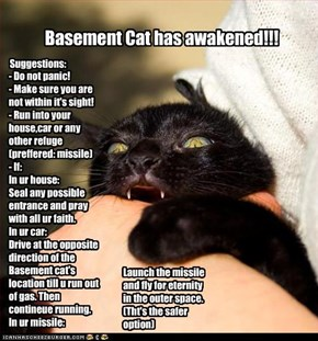 Basement Cat Alert