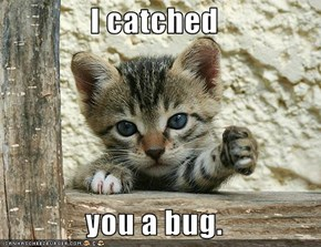 I catched  you a bug.