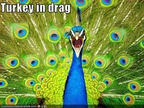 Turkey in drag
