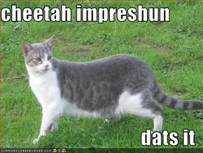 cheetah impreshun  dats it