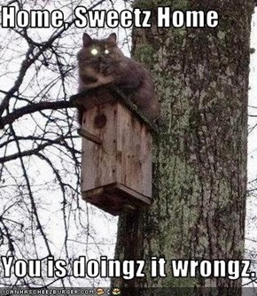 Home, Sweetz Home  You is doingz it wrongz.