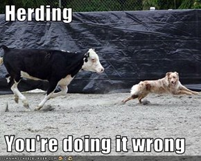 Herding   You're doing it wrong