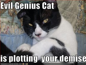 Evil Genius Cat  is plotting  your demise