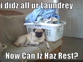 i didz all ur Laundrey  Now Can Iz Haz Rest?