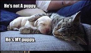 He's not A puppy.