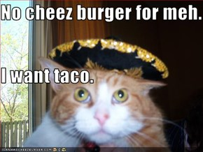 No cheez burger for meh. I want taco.