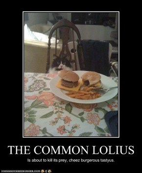 THE COMMON LOLIUS