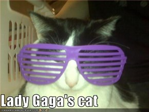 Lady Gaga's cat