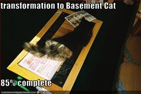 transformation to Basement Cat  85% complete
