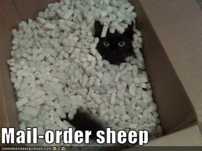 Mail-order sheep