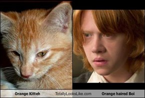 Orange Kitteh Totally Looks Like Orange haired Boi