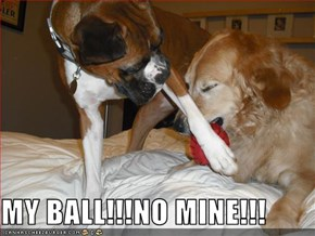 MY BALL!!!NO MINE!!!