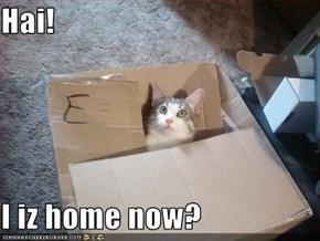 Hai!  I iz home now?