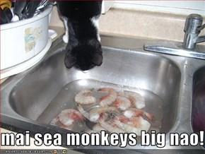 mai sea monkeys big nao!