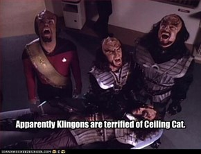 Apparently Klingons are terrified of Ceiling Cat.