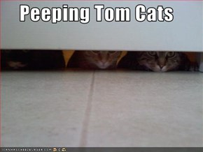 Peeping Tom Cats