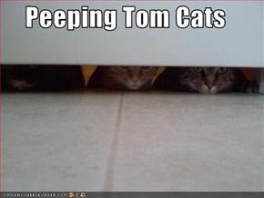 Peeping Tom Cats