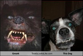 Gmork Totally Looks Like This Dog
