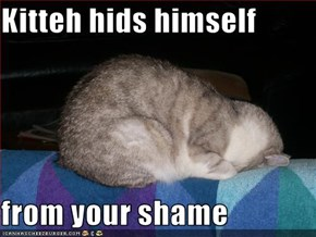 Kitteh hids himself   from your shame