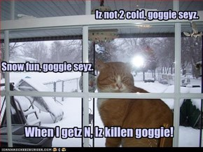 Iz not 2 cold, goggie seyz.