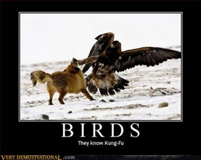 Birds Are Skilled Martial Artists