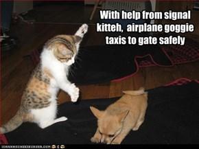 signal kitteh