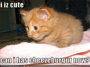 i iz cute   can i has cheezeburgur now?