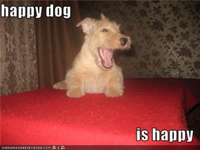 happy dog  is happy