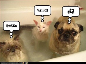 Two Wet Cats & a Dog