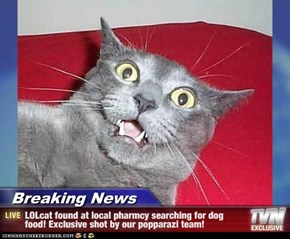 Breaking News - LOLcat found at local pharmcy searching for dog food! Exclusive shot by our popparazi team!