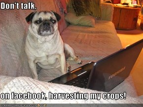 Don't talk,  on facebook, harvesting my crops!