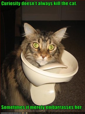 Curiosity doesn't always kill the cat.   Sometimes it merely embarrasses her.