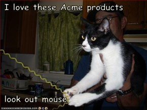 I love these Acme products   look out mouse