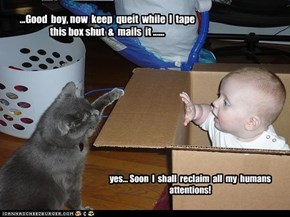...Good  boy, now  keep  queit  while  I  tape this box shut  &  mails  it ......