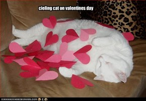 cieling cat on valentines day
