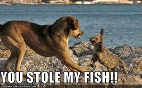 YOU STOLE MY FISH!!
