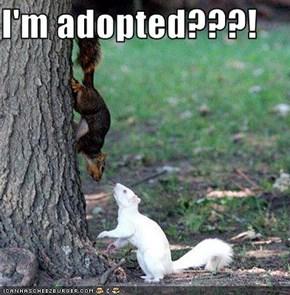 I'm adopted???!