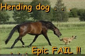 Herding dog . . .  . . . Epic FAIL !!