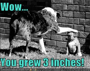 Wow...  You grew 3 inches!