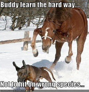 Buddy learn the hard way....  Not to hit on wrong species...