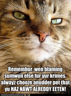 Kitteh Lessons 10- Shifting the Blame