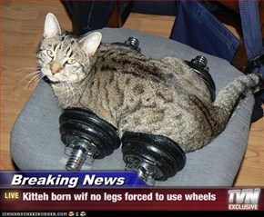 Breaking News - Kitteh born wif no legs forced to use wheels