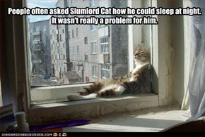 People often asked Slumlord Cat how he could sleep at night. It wasn't really a problem for him.