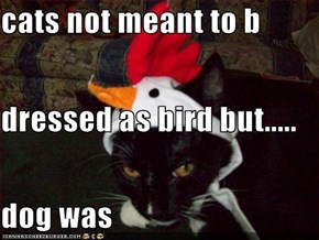 cats not meant to b dressed as bird but..... dog was