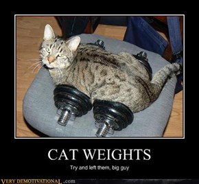 Damn Cat Weights
