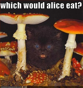which would alice eat?