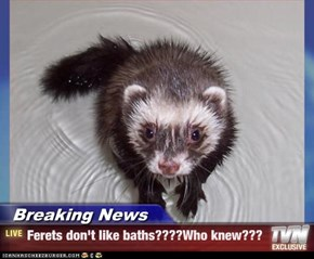 Breaking News - Ferets don't like baths????Who knew???