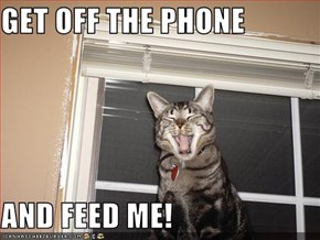 GET OFF THE PHONE  AND FEED ME!