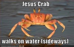 Jesus Crab  walks on water (sideways)