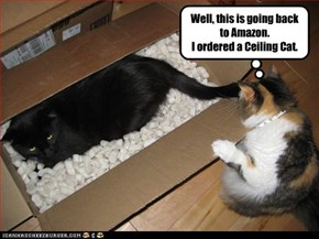 Well, this is going back to Amazon. I ordered a Ceiling Cat.